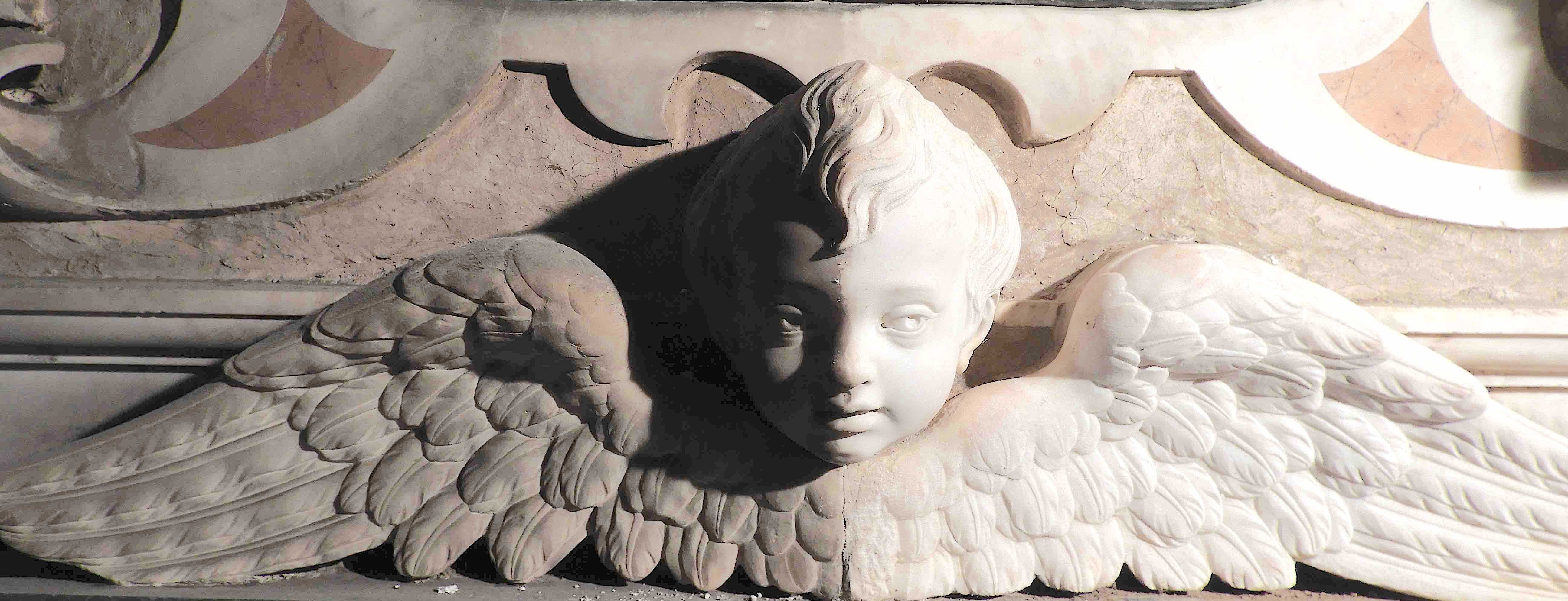 Marble Winged Infant Half Cleaned